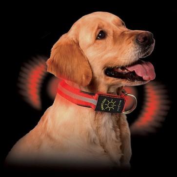 Collar para Perro Luminoso - Nite Ize 1